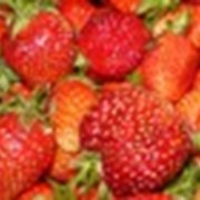 Выращивание ягод круглый год фото