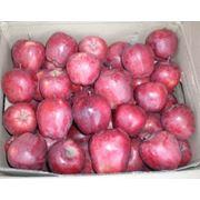 яблоки Старкримсон фото