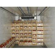 Яблоки летних сортов на экспорт из Молдовы фото