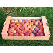 Персики Молдова фото