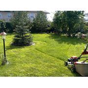 Посев газона полив очистка в Молдове фото