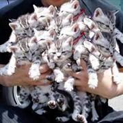 Стерилизация кошки, кастрация кота фото