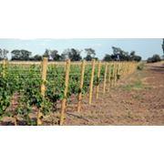 Посадка садов и виноградников фото