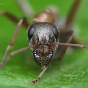 Уничтожение мурашей фото