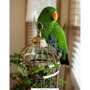 Клетки для животных Клетки для птиц фото