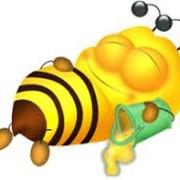 Мед, пыльца, перга, мед в сотах. фото