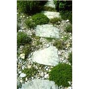 Камеистые сады фото