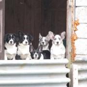 Загородная передержка для собак в Лен.обл фото