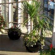 Зимние сады и фитодизайн интерьеров фото