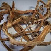 Красный корень, копеечник забытый (Radices hedysarae theinae) фото