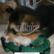 Перевозка домашних животных в такси. фото