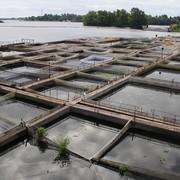 Fish farming фото