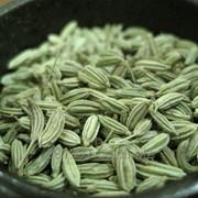 Фенкель зерновой фото