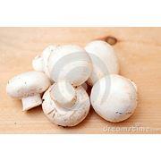 Ciuperci Champignon фото