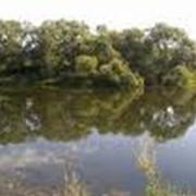 Участки в Брянске от 10 соток до 1000 га фото