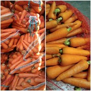 Морковь от производителя Самарской области. фото