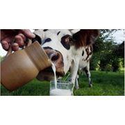 Страхование домашнего скота и породистых животных в Молдове фото