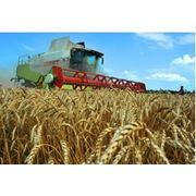 Страхование в сфере сельского хозяйства- Добровольное страхование урожая сельскохозяйственных культур фото