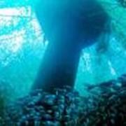 Садки рыбоводные фото