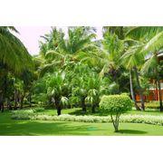 Отдых в Доминикане фото