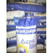 Семена подсолнечника гибрид Лимит (евролайтинг) фото