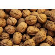 Орехи грецкие неочищенные фото
