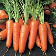 Морковь сладкая фото