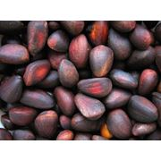 Орехи кедровые фото