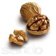 Ядро грецкого ореха фото