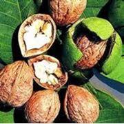 Орехи на ЭКСПОРТ Nuci din Moldova pentru export фото