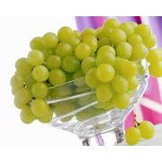 Виноград столовый в Молдове. фото