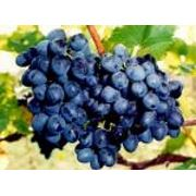 Виноград-Молдова фото