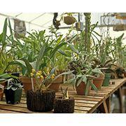 Растения комнатные фото