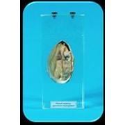 Noname Влажный препарат «Внутреннее строение моллюска» арт. Ed17652 фото