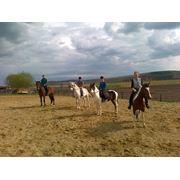Катание на лошадях в Молдове фото