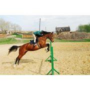 Школа верховой езды в Молдове фото