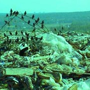 Обезвреживание отходов фото