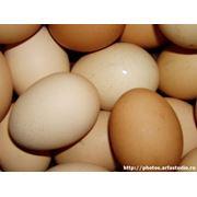 Куриные яйца фото