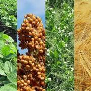 Агротехнологическое сопровождение фото