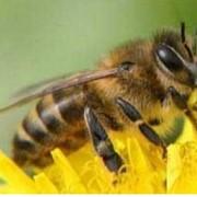 Борьба с пчелами, Украина Киев фото
