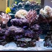Аквариумная морская и пресноводная рыба. Кораллы фото