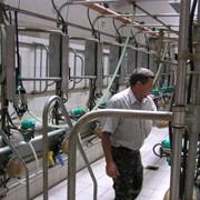 Строительство молочно-товарных ферм, проект молочно-товарных ферм фото