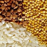 Крупы фасованные гречка, рис, манка, перловка, пшеничная фото