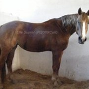 Лошади хобби класса Кобыла ЭМКА фото