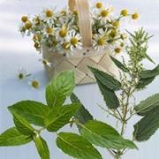 'Травы лекарственные: зверобой, семена расторопши, тысячелистник, лапчатка белая, калган, живица сосновая, шиповник, сабельник, бадан, гинкго билоба фото