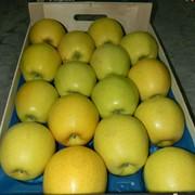 Свежие фрукты яблоки сорта «Голден Делишес» фото