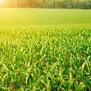 Препарат для предпосевной обработки семян Иншур перформ фото