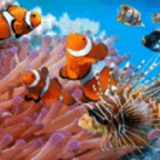 """Кораллы"" 990х680 мм фото"