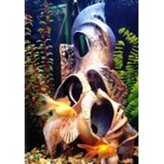 Интерьерные аквариумные системы, товары для аквариума фото