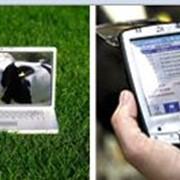 Электронные системы ухода за стадом коров фото